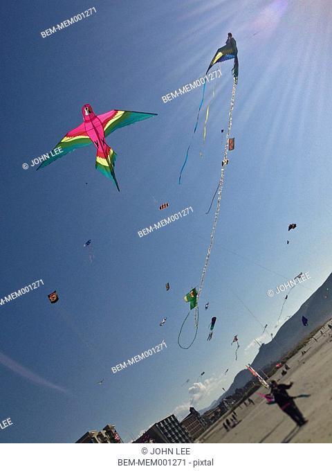 Kites flying on beach