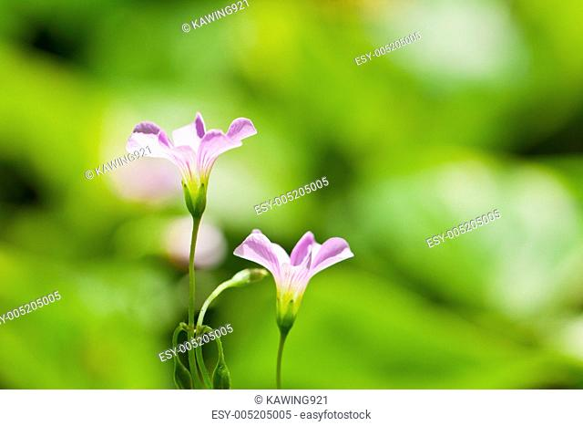 Pink flowers in green background