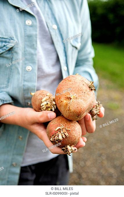 Boy with handful of potatoes