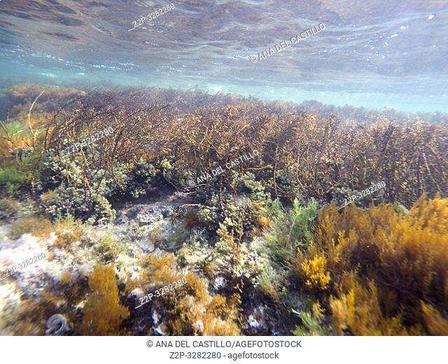 Las Rotas beach underwater San Antonio Nature reserve in Denia Alicante Spain