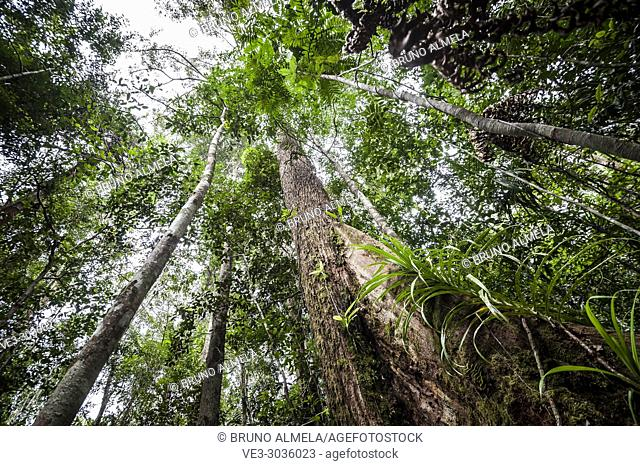 Tropical rainforest in Tanjung Puting National Park (Central Kalimantan Province, Borneo, Indonesia)