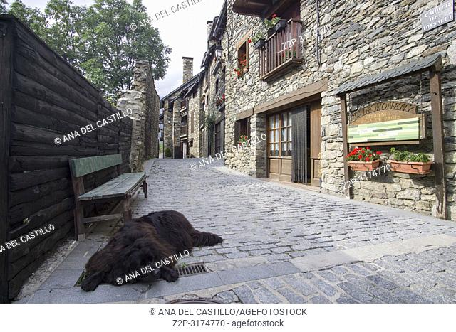 San Climent de Taull village in Boi valley Lleida Catalunya Spain. Street with big dog