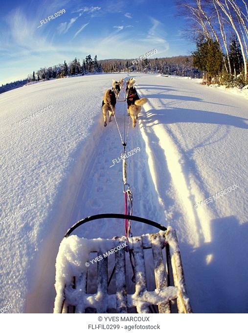 Dog Sledding on Frozen Lake, Lanaudiere Region, Entrelacs