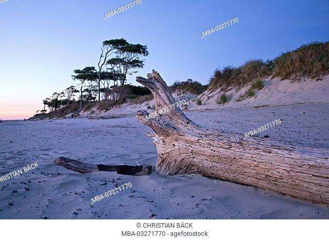 At the west beach near Prerow, peninsula Fischland-Darss-Zingst, Baltic coast, Mecklenburg-Western Pomerania, Germany