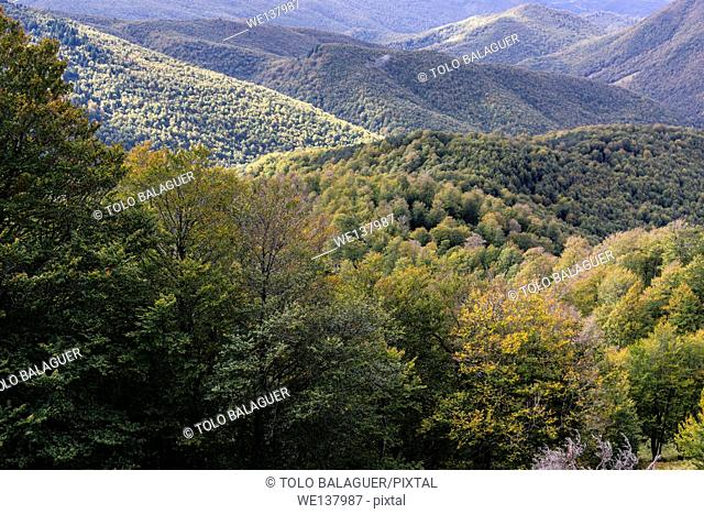 Reserva integral de Lizardoia, Irati Forest, Navarre, Spain