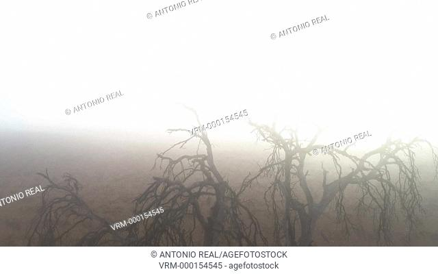 Aerial view. Holm oak with fog. Almansa. Albacete province