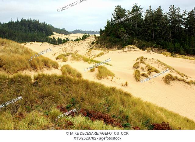 Sand dunes along the Oregon coast
