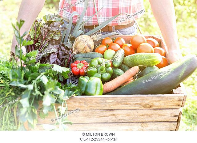 Close up of man holding crate of fresh harvested vegetables