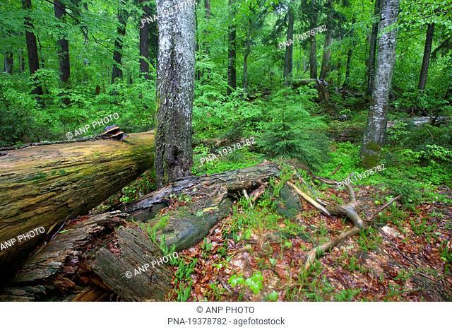 Wildnisgebiet DÆ'rrenstein, Rothwald, Rotwald, Ybbstal Alps, Lower Austria, NiederÃœsterreich, Austria, Europe