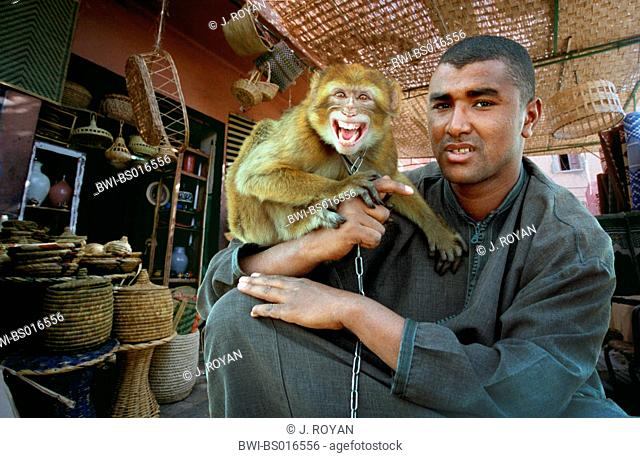 barbary ape, barbary macaque (Macaca sylvanus), Moroccan with monkey, on the Jemaa El Fna square, Morocco, Marrakesh