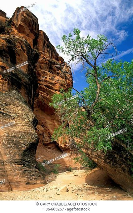 Dry Creek bed in narrow canyon, Red Cliffs Recreation Area, Utah's Dixie near St. George, Utah, USA