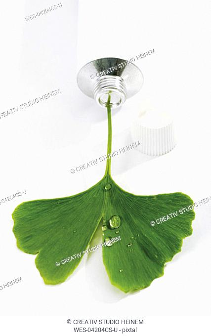 Ginkgo leaf in tube, elevated view, close-up