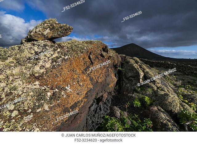 Lava field and lichen , La Geria, Lanzarote Island, Canary Islands, Spain, Europe