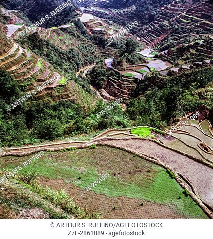 Banaue Rice Terraces, Ifugao Province, northern Luzon, Philippines