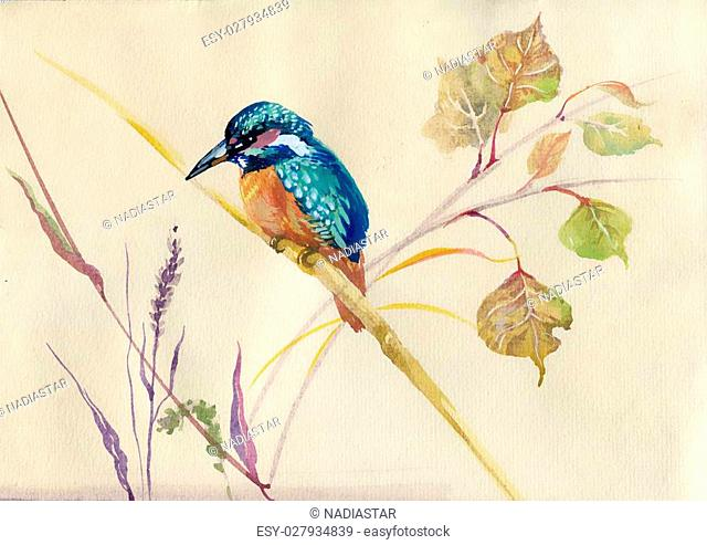 Watercolor Animal Collection: Common Kingfisher bird