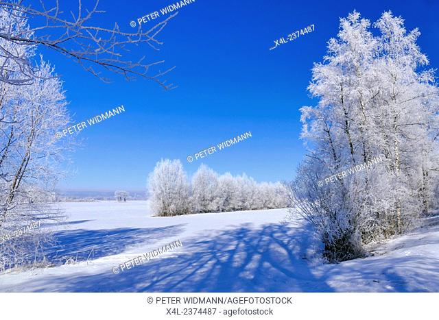 Rime on trees on a cold winter day, Upper Bavaria, Germany