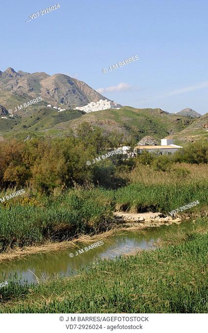 Aguas River mouth surrounded of reed (Phragmites australis) and tamarisk (Tamarix). Mojacar, Almeria province, Andalucia, Spain