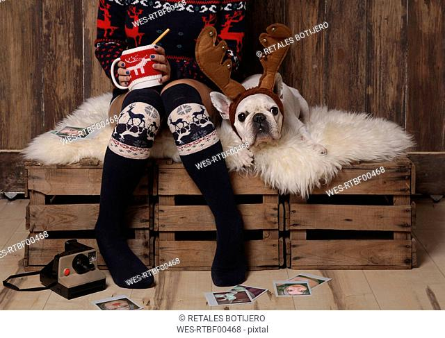 Young woman wearing winter fashion sitting besides her French bulldog at Christmas time