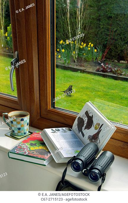 Watching garden birds from the comfort of your house