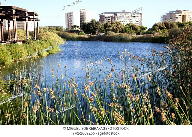 Green point Park in Cape Town - South Africa