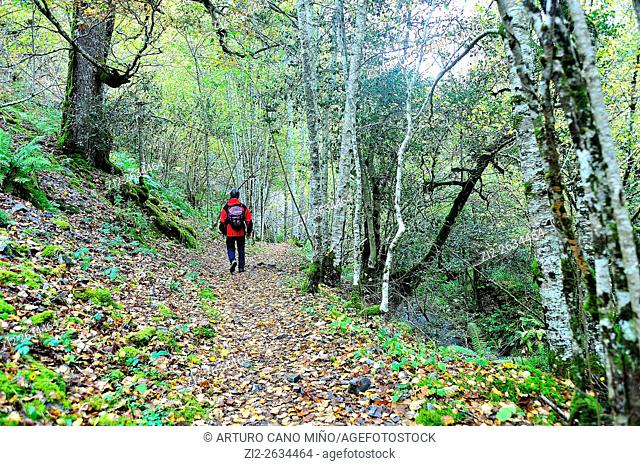 The Muniellos Nature Reserve, Asturias, Spain