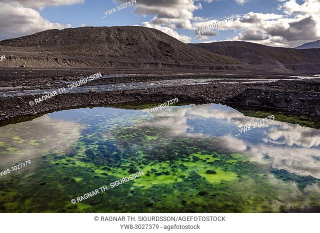 Algae in a small pond, Gigjokull Glacier in the background, Iceland