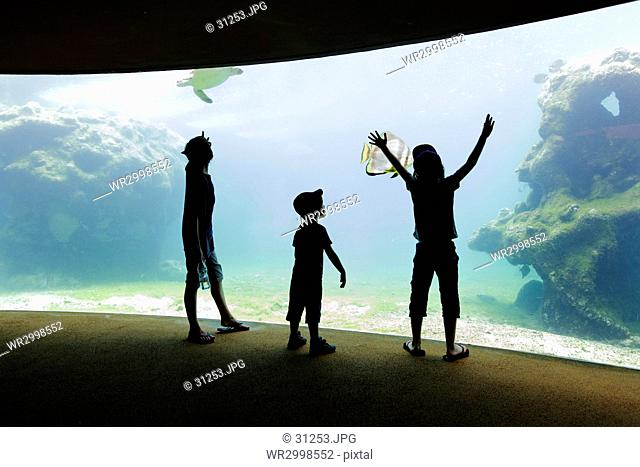 Three children, boys in a row standing by a glass wall in an aquarium with a view into a tank of water with marine life