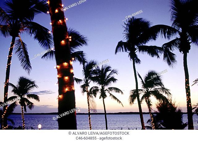 Coconut trees. Bahamas