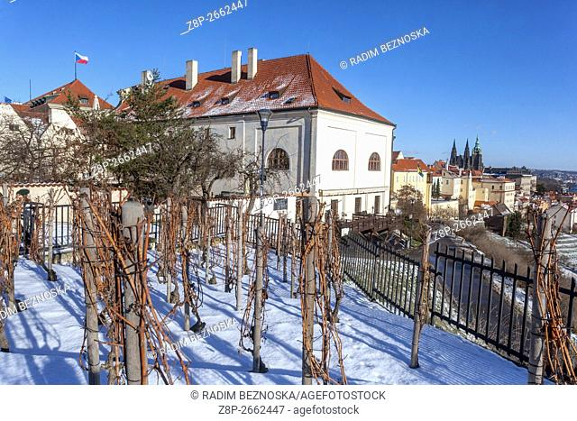 Snowy vineyards below the Strahov Monastery with a view of Prague Castle and the city. Prague, Czech Republic