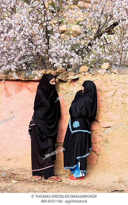 Berber women chatting in front of a wall with blossoming almond trees (Prunus dulcis) behind, village of Adaï in the Ameln Valley, Anti-Atlas mountains