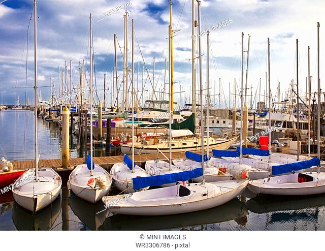 Sailboats Docked in Marina