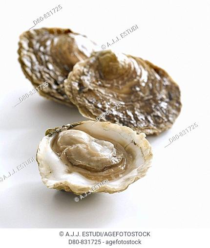 Galician oysters