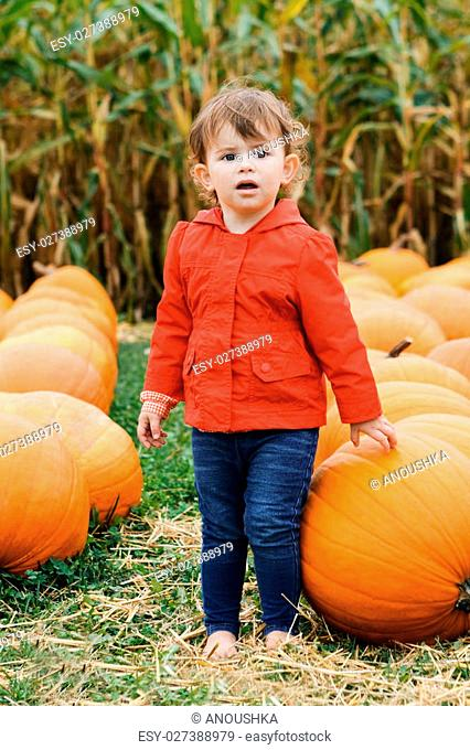Portrait of a cute funny adorable Caucasian baby toddler in red jacket and blue jeans on a farm with pumpkins. Halloween Thanksgiving card