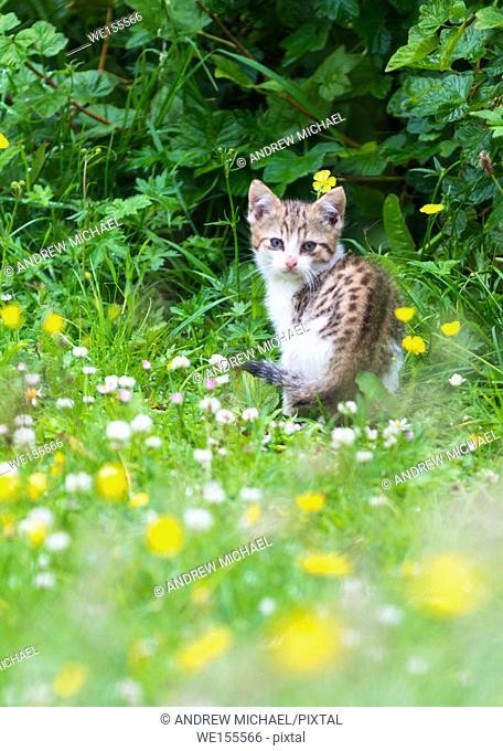 Cute kitten in the garden
