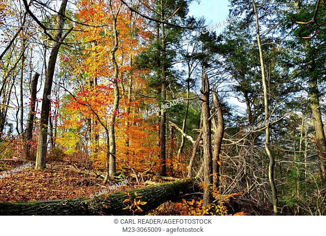 A disorderly autumn scene in the forest, Pennsylvania, USA
