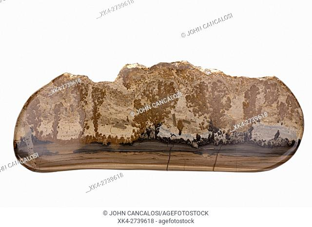 Cotham Marble or Landscape Marble is a variety of Rhaetian stromatolitic limestone from the Penarth Group, found in south Wales and southwestern England in the...