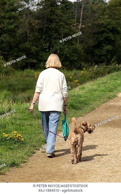 Woman, back to camera, walking Airdale type dog on country path