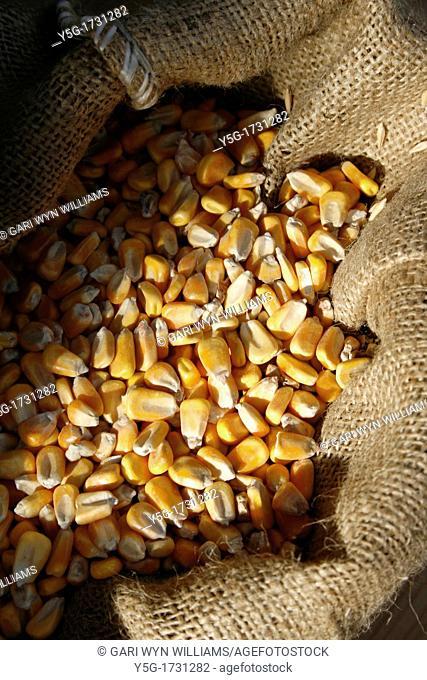 sack full of corn