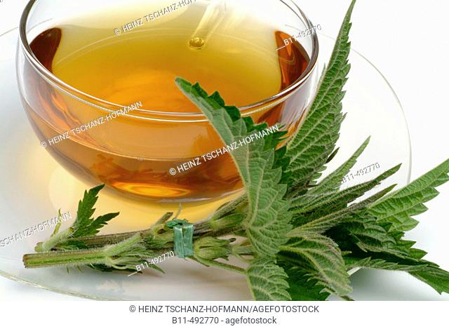 Urtica dioica, medicinal tea made of Common nettle, stinging nettle, fresh parts and cup of tea