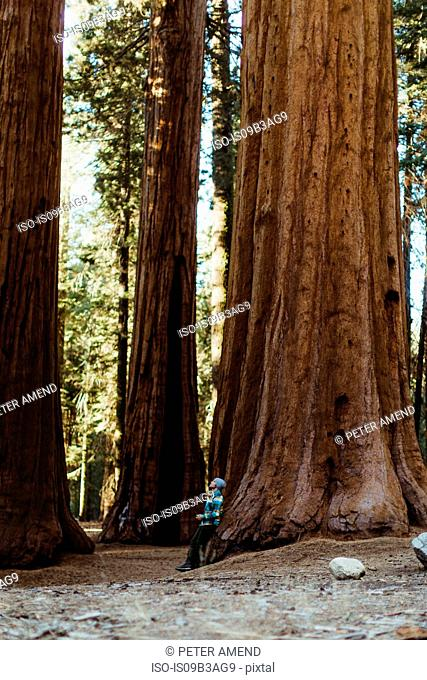 Man leaning against sequoia tree, Sequoia national park, California, USA