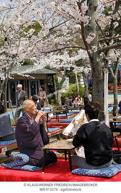 Man drinking sake or rice wine during the cherry blossom festival in the Maruyama Park, Kyoto, Japan, Asia