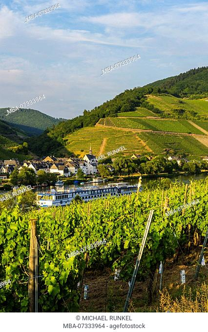 Vinery above Zell. Moselle valley, Rhineland-Palatinate, Germany