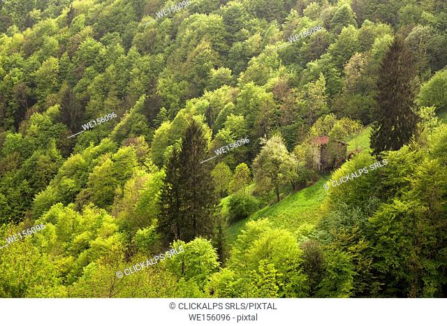 Zambla pass, Orobie, Lombardy, Italy. A small house into the woodland