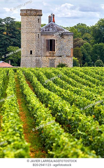 Pinot noir vineyards, Chateau de La Tour, Vougeot, Côte de Nuits, Côte d'Or, Burgundy Region, Bourgogne, France, Europe