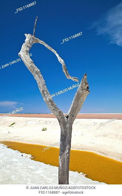 Salt flats, Rio Lagartos nature reserve, Yucatan peninsula, Mexico