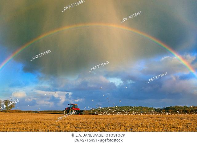 Ploughing stubble with rainbow Langham Norfolk Winter