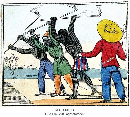 'Negroes Holing the Cane-Field', 1826. Black slaves working a the sugar cane field while the overseer with whip stands over them