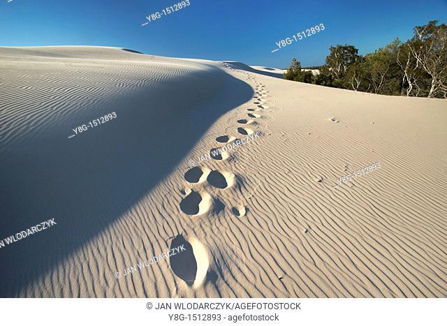 Mooving dunes in the Slowinski National Park, Poland, Europe