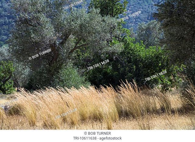 Landscape Western Samos Greece