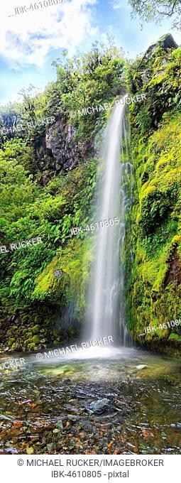 18m high Dawson Falls waterfall in the middle of a tropical rainforest, Dawson Falls, Mount Taranaki or Mount Egmont, Whanganui National Park, North Island